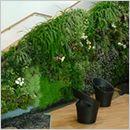 Mur végétalisé (mur végétalisé intérieur et ...