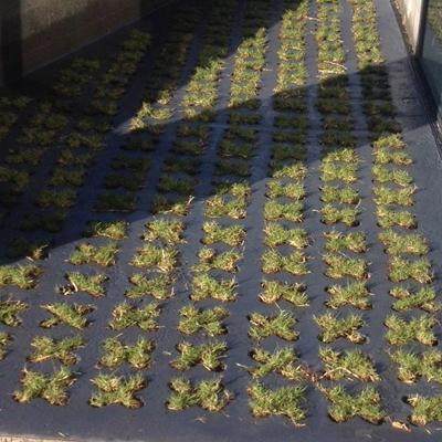 GrassCrete™ - Solution pour béton végétalisé drainant
